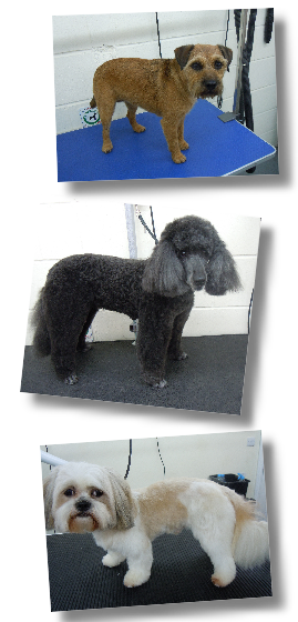 Annabelle Dog Grooming