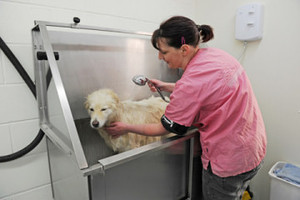 Dog bathing Ruff to Fluff dog grooming
